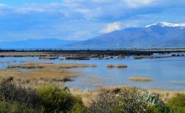 Rivage de lac au printemps Image stock