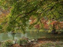 Rivage de lac en automne Image stock