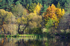 Rivage de lac en première source Photos stock