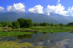 Rivage de lac Kerkini, Grèce Photo stock