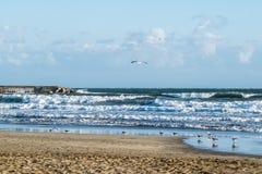 Rivage de plage avec des mouettes, grandes vagues Photographie stock libre de droits
