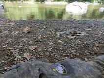 Rivage de rivière avec des roches Photographie stock