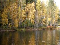 Rivage du lac en automne photos libres de droits