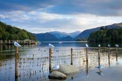Rivage du nord de l'eau de Derwent Image libre de droits