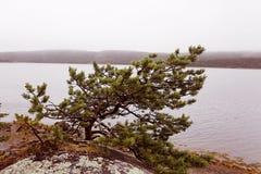 Rivage froid de lac Images libres de droits