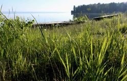 Rivage herbeux du lac Photographie stock