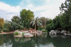 Rivage rose de flamants des habitats naturels d'étang Copiez l'espace Taille de bannière Images libres de droits