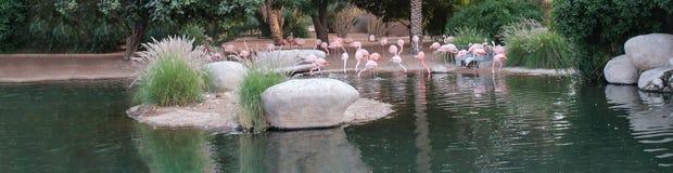 Rivage rose de flamants des habitats naturels d'étang Copiez l'espace Taille de bannière de Web Photographie stock