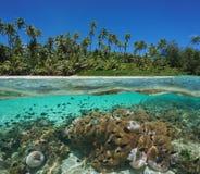 Rivage tropical plus de sous des poissons d'anémone sous-marins Photo libre de droits