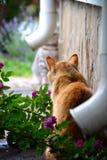 Rivalität mit zwei Katzen Lizenzfreie Stockfotografie