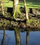 Rive, avec des réflexions dans l'eau claire Photos libres de droits