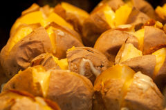 Riven baked patatoes in the oven Stock Photography