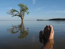 River. Feet in the river Tapajos - Amazônia - Brazil Stock Photography