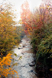 River. With trees from the autumnal colors Royalty Free Stock Photo