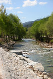 River. Mountain river and rapids between trees Royalty Free Stock Image