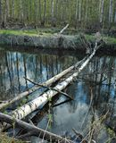 River. In russia forest spring Stock Photo