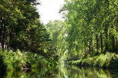 River. A quiet river surrounded by trees Stock Photos