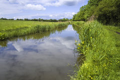 River. The banks of a river, with bushes and trees Stock Images