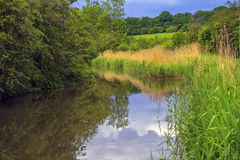 River. The banks of a river, with bushes and trees Royalty Free Stock Photo