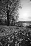On The River. Taken at river bank park on the Susquehanna river in Harrisburg  PA Stock Photography