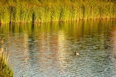 River湖 免版税库存照片