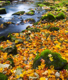 River. With yellow leafs and green mossy stones stock image