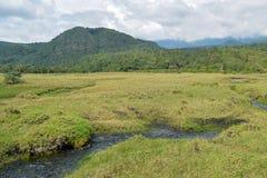 River against a mountain background, Mount Meru, Arusha National Park. The Savannah Grassland against a mountain background, Mount Meru, Arusha National Park royalty free stock photo