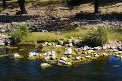 River with alga Stock Photos