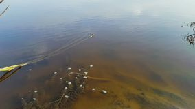 River algae stock footage