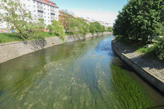 River with algae Stock Images