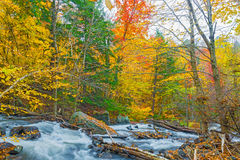 River in Algonquin Park in Ontario, Canada. Stock Photo