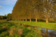 River Allen, Wimborne St Giles, Dorset, UK Royalty Free Stock Photography