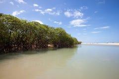 River along Trancoso Beach in Bahia, Brazil. River along tropical vegetation in Trancoso beach. Trancoso Village, Bahia, Brazil royalty free stock photography