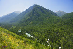 River in Altai Mountains Stock Images