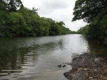 River in the Amazon. Black waters and lush forest Stock Photo