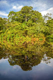 River in the Amazon Rainforest, Peru, South America stock images
