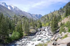 River in American Cascades, USA. River in American Cascades forest Royalty Free Stock Photo