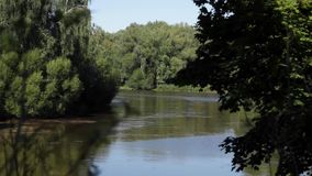 River amidst greenery stock video footage
