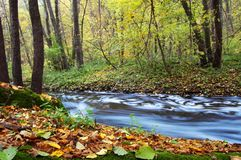 River amongst autumn trees Royalty Free Stock Photos