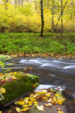 River amongst trees. An image of blue river in forest Stock Photos