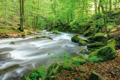 River in the ancient beech forest. Stones covered in moss. smooth water flow, long exposure. beautiful nature background. refreshing summer scenery royalty free stock photo