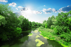 Free River And Forest Stock Image - 48586991