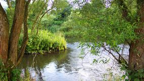 River And Trees Royalty Free Stock Images