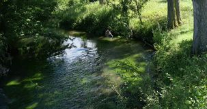 River with Aquatic Plants, Normandy. Real Time 4K stock video footage