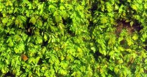 River with Aquatic Plants, Normandy stock video