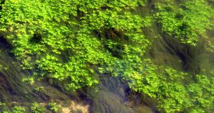 River with Aquatic Plants, Normandy stock footage