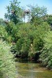 River Arade, Silves, Portugal. Storks nesting in a tree above the river Arade, Silves, Portugal, Europe stock image