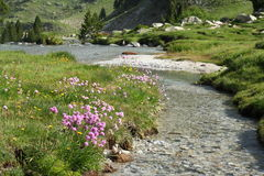 River in Aragon Pyrenees. Alpine meadow and river in Aragon Pyrenees Stock Photos
