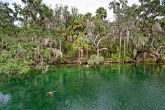 River area in Florida Royalty Free Stock Photography