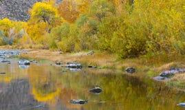 River Aspens Stock Photos